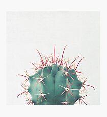 Ferocactus Photographic Print