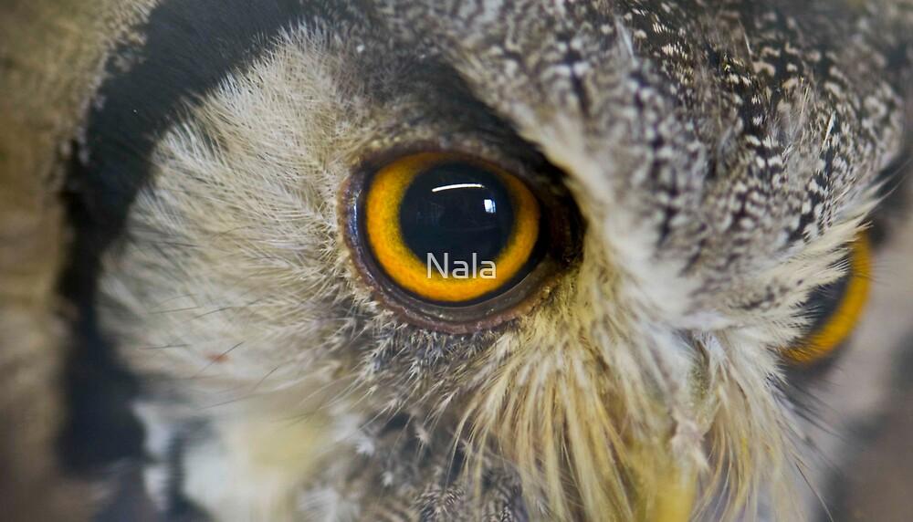 Wise Eye by Nala