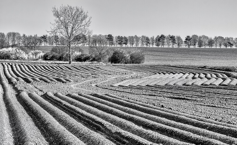 Ploughed fields by DaleReynolds