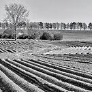 Ploughed fields by DaleReynolds