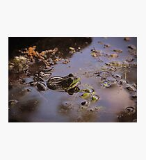 Bull Frog in Pond Photographic Print