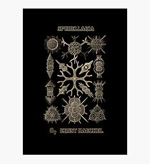 """Spumellaria"" from ""Art Forms of Nature"" by Ernst Haeckel Photographic Print"