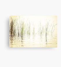 Reeds in Peaceful Lake Canvas Print