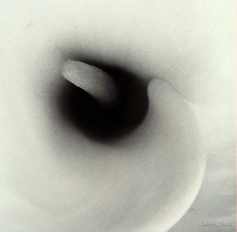 Calla lily by Johnny Davis