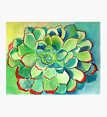 Summer Succulent Photographic Print