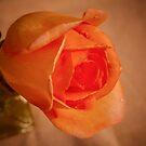 Orange Beauty by Pauline Tims