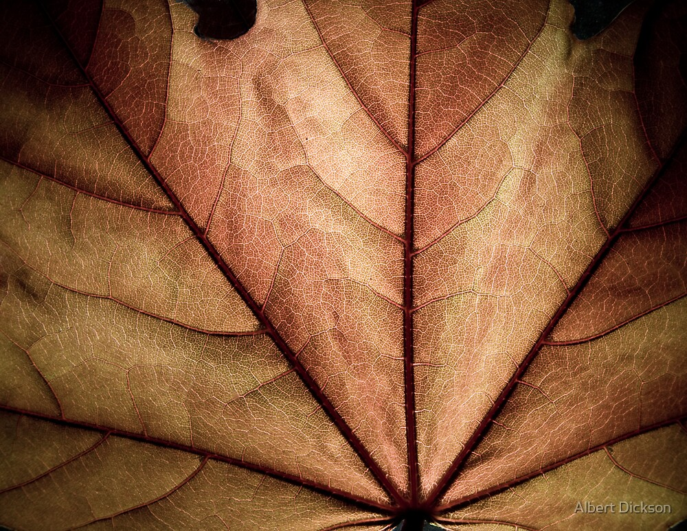 Silver Maple Leaf by Albert Dickson