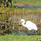 White Egret by Howard S Taylor