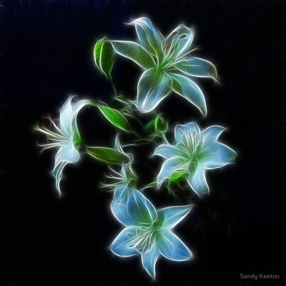 Lilies on Black by Sandy Keeton