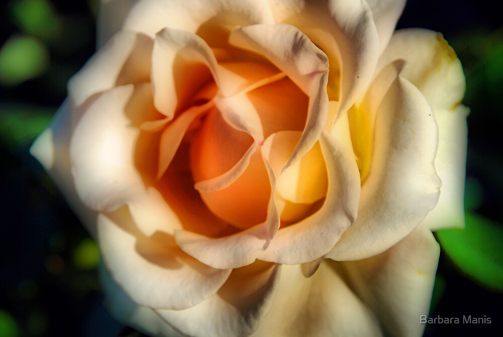 For You  by Barbara Manis