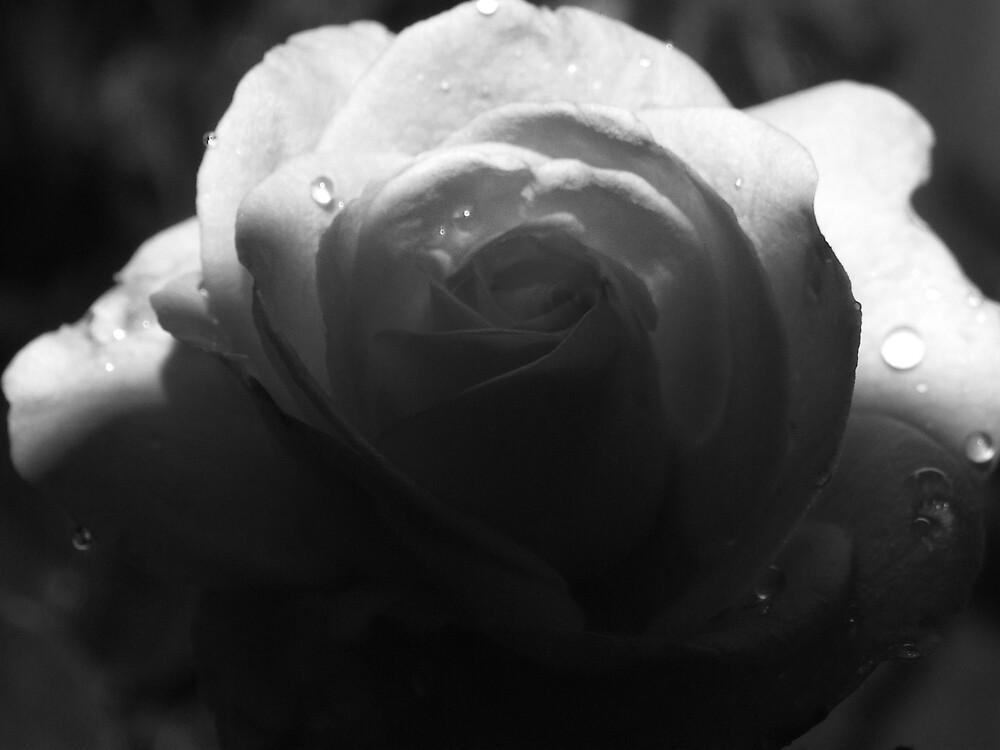 shady rose by Rebekah  Girolamo