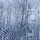 Zebra's winter camouflage by MooseMan