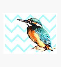 Blue Kingfisher Photographic Print