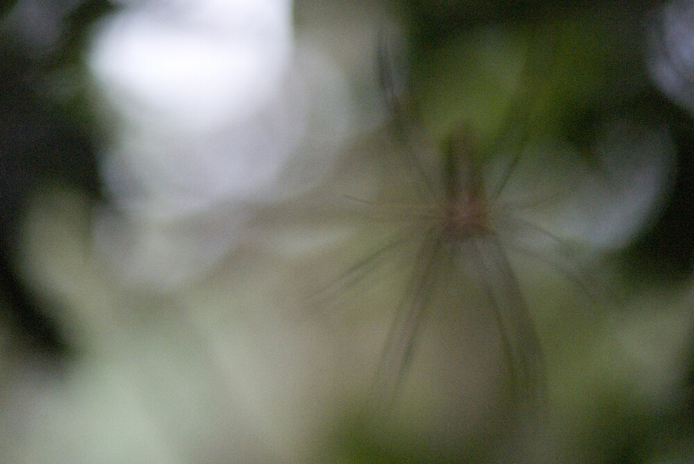 The blur spider by richardseah