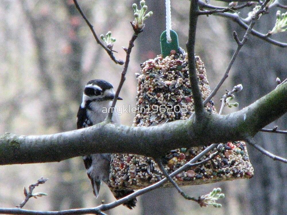 Female Hairy Woodpecker by amyklein196203