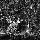 Trees in Black and White by Dene Wessling