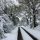 Tracks in the snow by John Dalkin