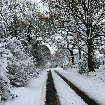Tracks in the snow by JohnDalkin