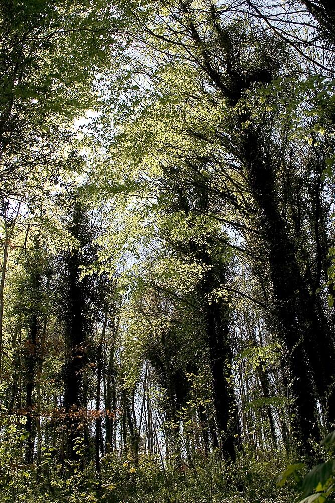 Woods by hellsbell