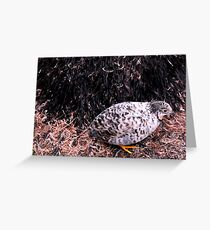 Button Quail Greeting Card