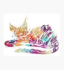 Cat Bonny Photographic Print