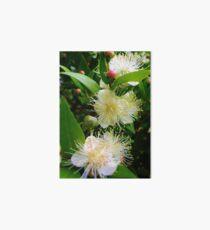 Myrtus communis (Myrtle) Art Board