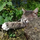 Tabby cat sleeping on stone wall by turniptowers
