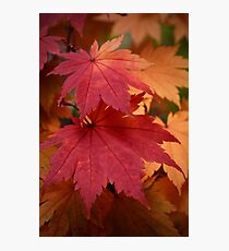 Bright Fall Foliage Photographic Print