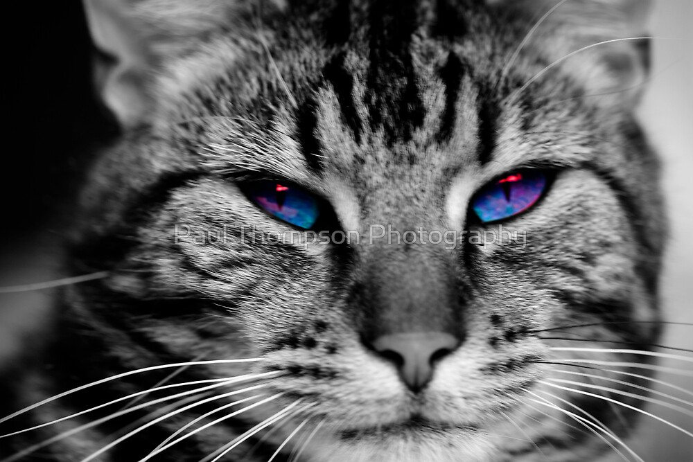 Evil Eyes by Paul Thompson Photography