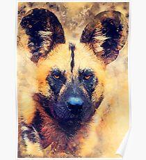 african wild dog #wilddog #animals Poster