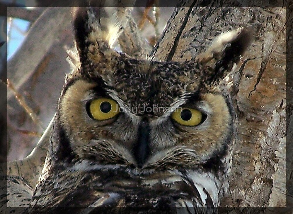 Through his eyes... by Jody Johnson