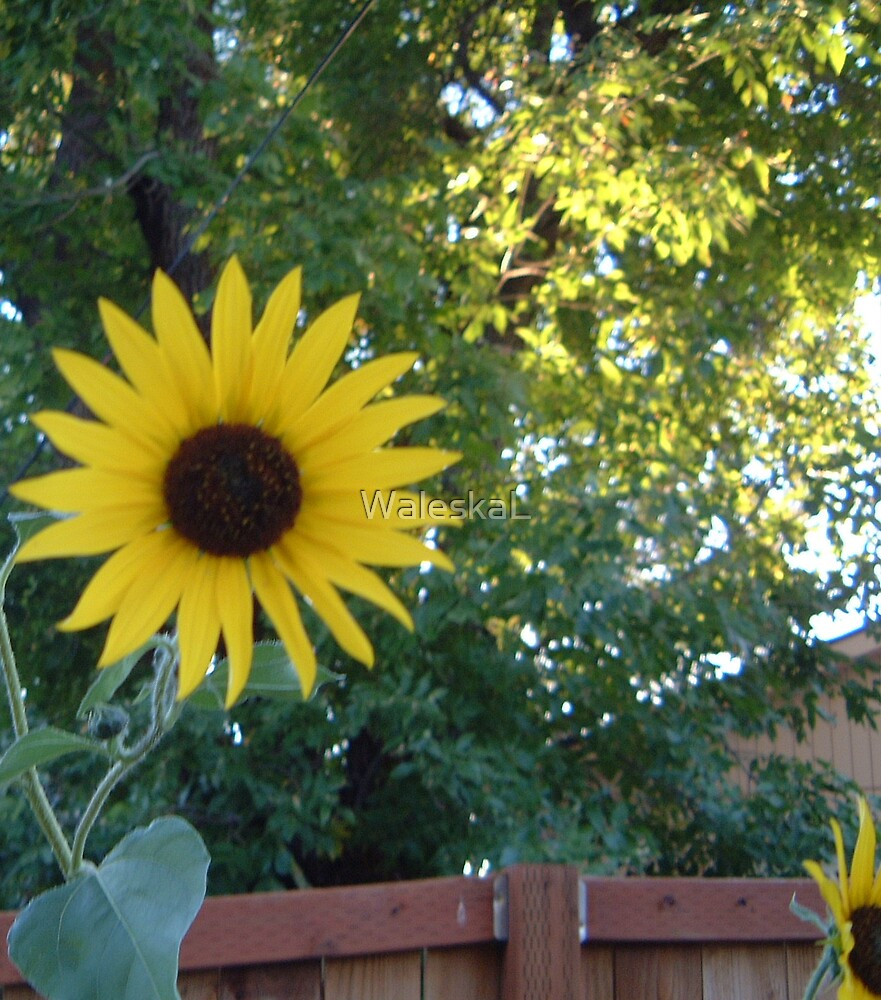A Lovely Blond Reaching for the Sun by WaleskaL
