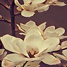 french botanical watercolor flower blossom white magnolia by lfang77