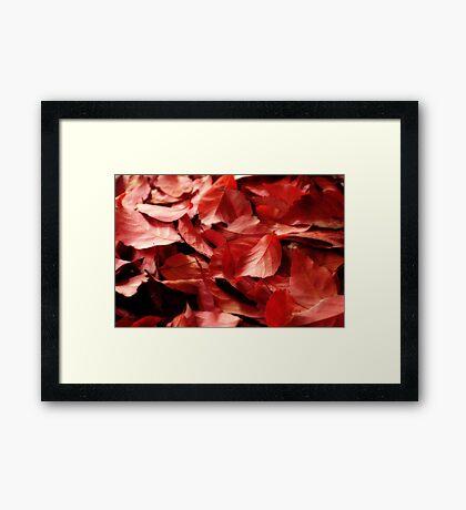 Fallen Red Leaves Framed Print