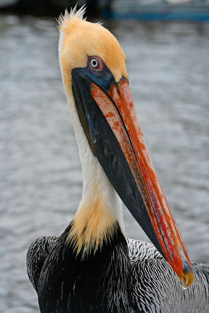 funky pelican 1 by Sol Whiteley