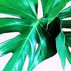 Cheese Plant Leaves by SexyEyes69