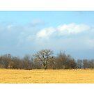 Open Field by danabee