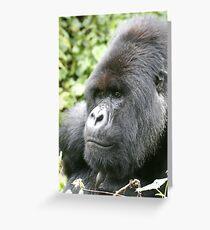 Silverback Mountain Gorilla Greeting Card