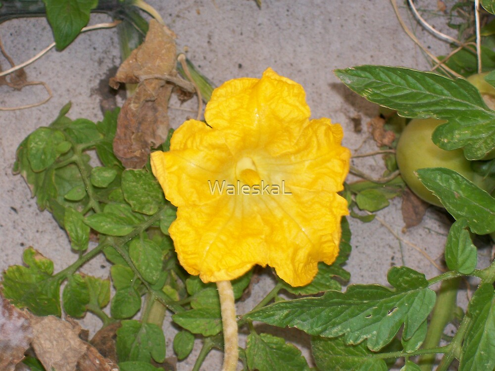 Tomatoes & Squash Blossom by WaleskaL