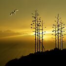 4587 by peter holme III