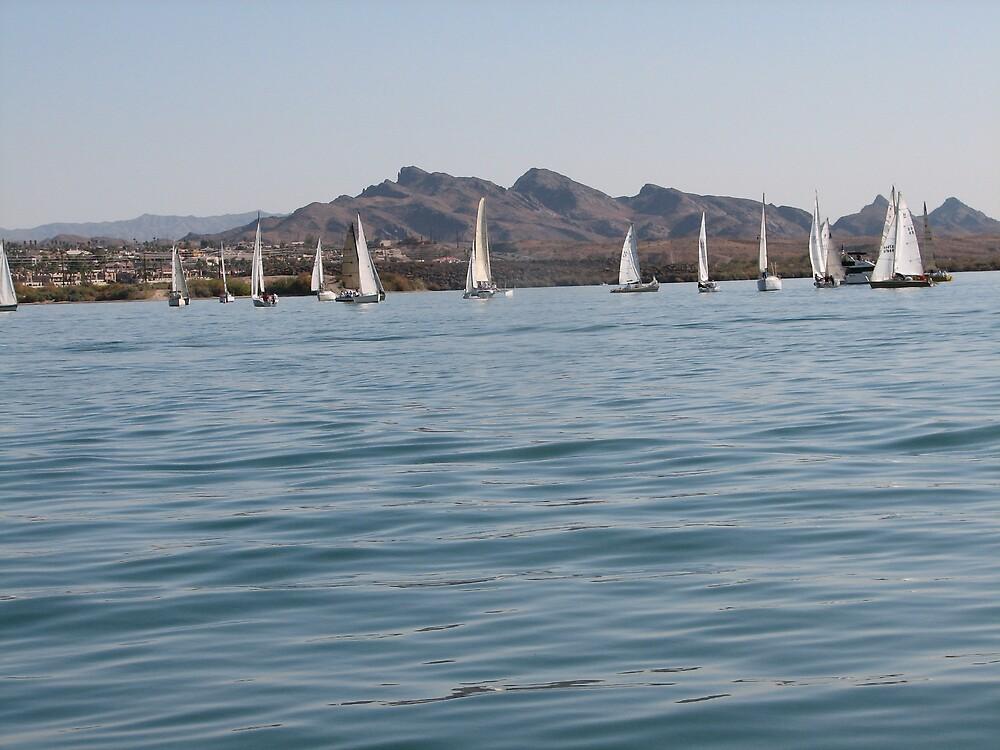 Sailboats by Bianchi