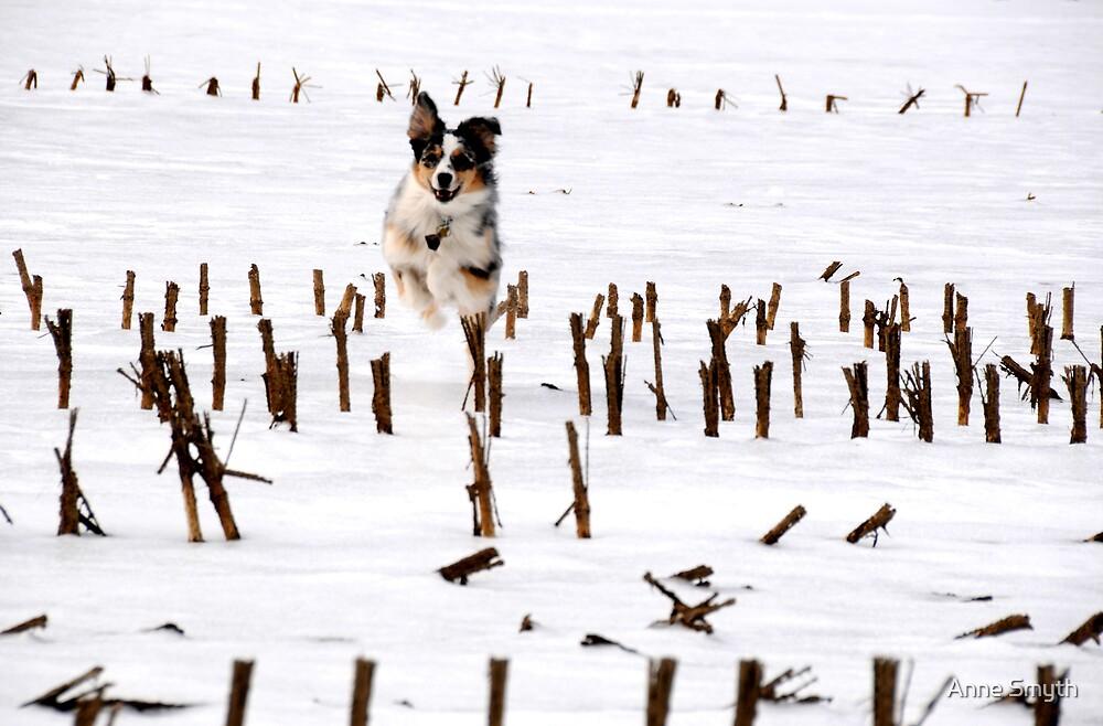 Dog In Corn by Anne Smyth