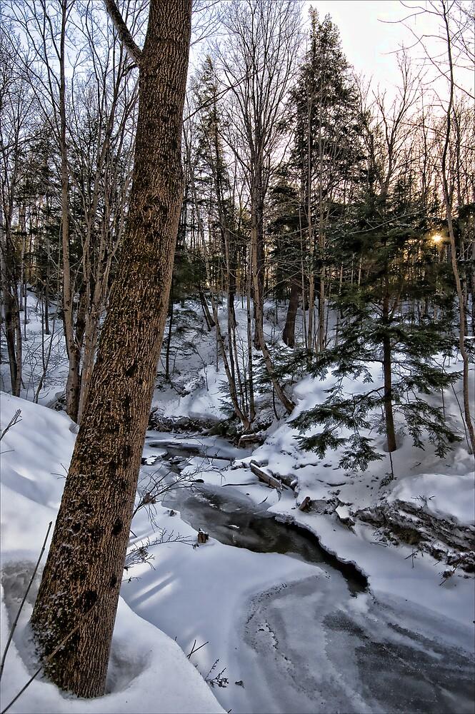 Copelands Creek - Winter Scene by RBFoto