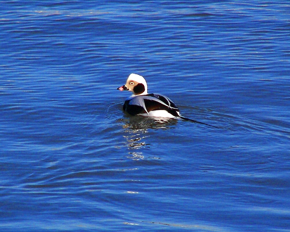 Birds on Lake Ontario by madmac57