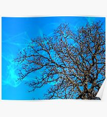 Beauty of Trees in Winter Poster