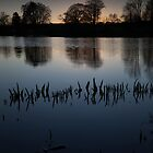 reeds, loch of fyvie by codaimages