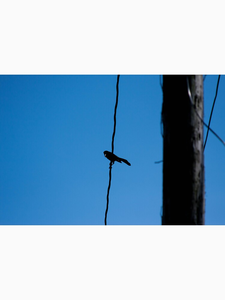 Bird on a wire by the-chillness
