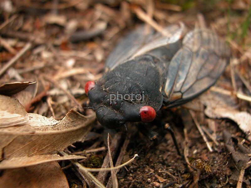 photoj Bug Time by photoj
