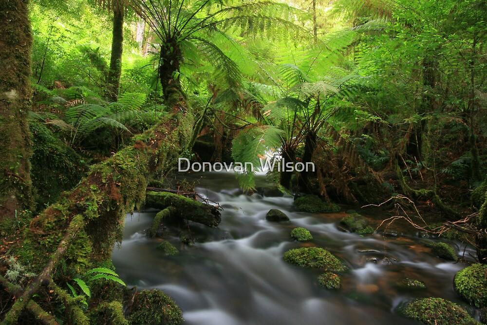 Dicksonia Antarctia by Donovan Wilson