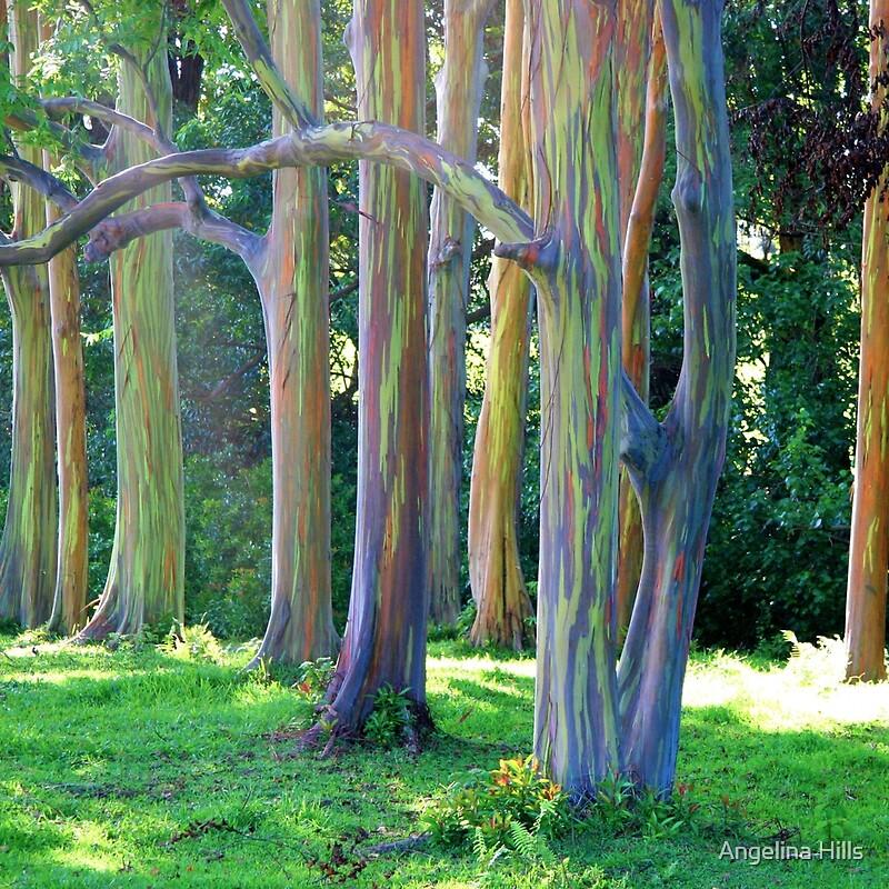 "Maui Off Road >> ""Rainbow Trees of Maui"" by Angelina Hills | Redbubble"